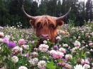 scottish_flowers